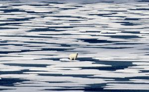 Mänskligheten befinner sig i en planetär kris och då måste våra politiker agera som om det vore en planetär kris, skriver debattören. Foto: TT