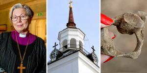 På lördag återinviger biskop Eva Nordung Byström Haverö kyrka, en byggnad som både befriats från kyrksvamp och visat sig dölja två skelett varav det äldsta från 1200-talet.