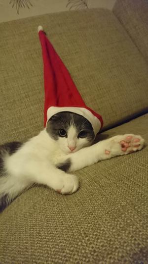 361) Men kolla vem man hittade i soffan, vår egna lilla jultomte. Foto: Patricia Steen