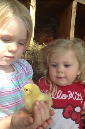 Mina barn Anna Och Stina som mysa med våra små kycklingarna som kläcktes i förra veckan.