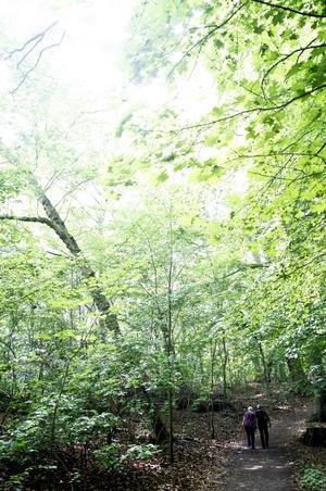 Karen Blixens barndomshem omges av en fin bokskog.