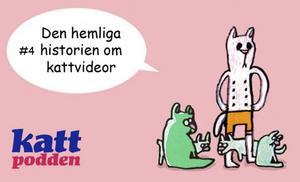 Lyssna på Kattpodden! Om den hemliga historien bakom kattvideor.