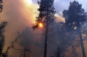 Skogen i Helvetesbrännan har fått sin särprägel genom många skogsbränder genom århundradena.
