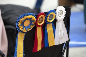 Svensk vinnarutställning  med närmare 4000 hundar arrangerades i påskhelgen i Nordichallen i Sundsvall.