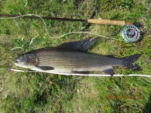 Ledande harr tog hem fiskeligans första period. Återstår att se om den håller över de två kommande perioderna.