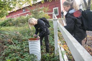 Cirka tusen enskilda avlopp har redan inspekterats i Nynäshamns kommun. Ungefär lika många återstår.