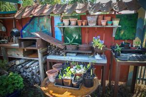 I rummet som kallas barnkammaren driver Lenny Clarhäll upp växter från frö och sticklingar.