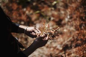 Det brända blåbärsriset är helt dött. Naturen kommer att få kämpa för att producera nytt säger Dang.