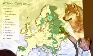 Håkan Sand visar vargens utbredning över Europa.