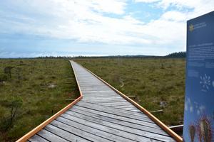 En 500 meter lång tillgänglighetsanpassad ramp leder fram till plattformen.