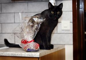 Katten Lakrits vann tävlingen två år innan och blev Lussekatten 2006. Foto: Anders Forngren