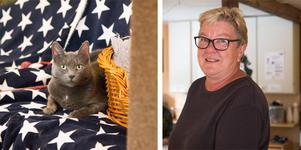På Nynäshamns katthem bor räddade katter som behöver ett nytt hem. Ordförande Ann-Chatrine Qvick menar att anledningen till att så många katter är hemlösa är för att ägare inte låter kastrera sina katter.