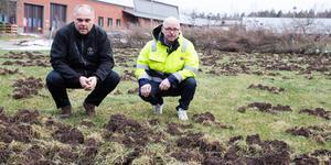 Peter Jönsson och Jocke Alm vid den förstörda gräsmattan vid Tornet.