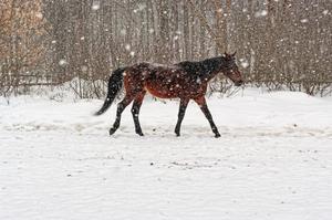 Fotot är en arkivbild från mostphotos. Hästen på bilden är inte samma häst som nämns i artikeln.