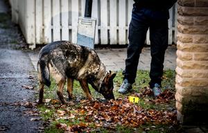 En brottsplatsundersökningshund hjälper polisen att söka efter spår.