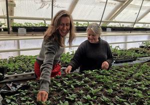 Totalt finns det sju växthus i olika storlekar. Anna Heed och Barbro har fullt upp dygnet runt när säsongen väl har startat.  Att ha stora växthus är ett ständigt laborerande med värme kontra kyla.