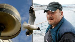 Benny Ersson menar att stadsborna till viss del har sig själva att skylla när måsarna flyttar från havet till stan.