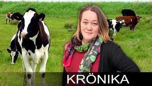 Karin Bergkvist, Politisk redaktör för GD.