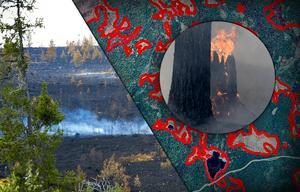 Fotomontage: TT Nyhetsbild/Nisse Schmidt/Lantmäteriet. Stödpaket till branddrabbade markägare – utbetalning 2019