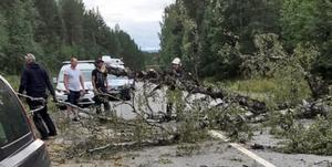 Trädet, stort, tjockt och genomruttet, föll rakt ned och träffade en förbipasserande personbi. Det här hände längs väg 331 i trakterna av Helgum. Foto: Privat