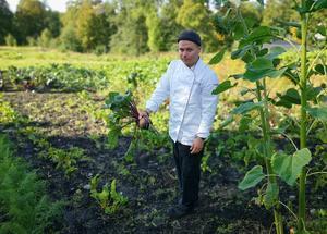 Under årets ekokock fick finalisterna skörda alla råvaror i Växjös stadsträdgård. Något som föll sig naturligt för Robin Hytter som ofta skördar grönsaker i Färna herrgårds egen trädgård. Bild: Rickard Westerbergh.