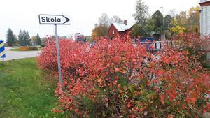 Höst i Trönö. Foto: Tommy Ström