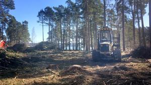 Kommunen har avverkat skog vid Näsets udde, nära Glashyttans värdshus, Torpa pensionat och den badplats som ligger i området.
