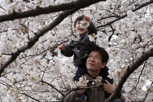 En pappa och hans barn leker i Chidorigafuchi Imperial Palace, Tokyo.
