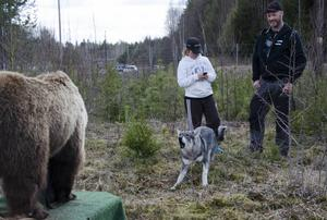 Stefan Mikaelsson och hans son Arvid Sättlin såg på när deras Liza mötte björnen.