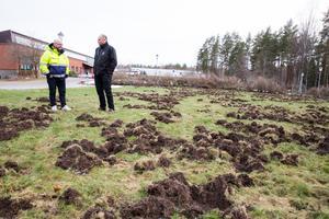 Under nyårshelgen fick Tornet i Arboga flera gräsmattor förstörda av vildsvin. Jocke Alm och Peter Jönsson betraktar förödelsen.