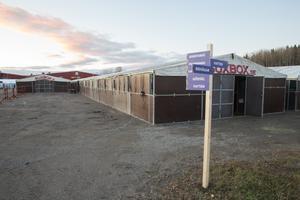 224 boxar finns på plats för de tävlandes hästar. Under torsdagskvällen börjar de första ryttarna att anlända, samtidigt som den första banan har börjat byggas.