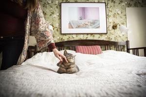 Katten Blixten njuter i sovrummet.