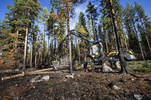 Fjolårets bränder i Ljusdals kommun lämnade stora skador efter sig.