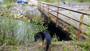 Den gamla bron var utdömd av Trafikverket. Och avspärrad.