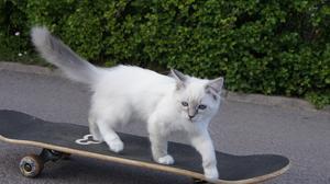 Katten Zilla testade åka skateboard. Hon tyckte det var roligt men svårt.