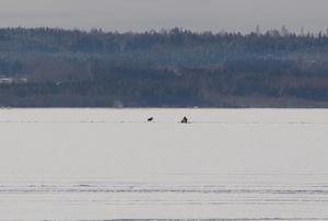 Det visade sig vara en älg som låg och vilade på isen. Den sprang mot Alnö efter det att räddningsstyrkans skoter kommit fram.