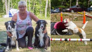 Med start på måndagen är agilitydagarna i Fagersta igång. Tävlingarna pågår fram till och med lördag ute i Semla.