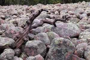 Klapperstensfält som formats av vågor för tusentals år sedan ligger högt uppe på bergen.