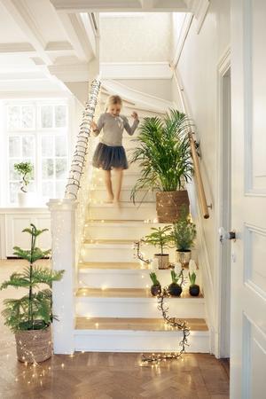 Julgranen har en given plats i hemmen, men får i år sällskap av andra julträd som rumsgran och cypress. Foto: Plantagen