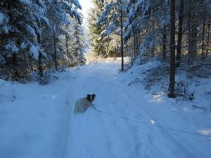 Laiza på vinter promenad på Ren