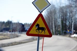 Visa hänsyn när du möter hästar på vägen, uppmanar Pauline Björnmyr.
