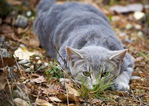 En av katterna som uppehöll sig vid gården efter att polisen hämtat ett stort antal katter 2016. Arkivbild