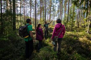 Malingsbo ekopark. Foto: Simon Green / Wild Sweden