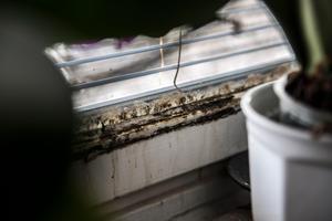 Svartmögel är hälsofarligt. Att fönstret vid Lars säng är extra påverkat gör inte situationen bättre.