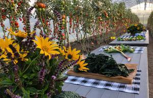 Här är en bild som tagits fram för att visa hur det kan se ut i det omgjorda växthuset. Bild: Högbo Bruk