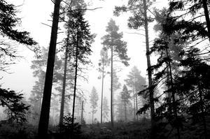 Namnen ger skogen en tydlig silhuett, skriver Kristian Ekenberg, Bild: TT