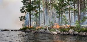 """Naturvårdsbränning på Långön 1 juli 2019. """"Syftet med bränningen var att reducera mängden gran på ön"""" säger bränningsledaren Anders Heurlin. Foto: Leif Helldal,"""