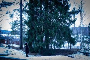 Granarna har stått utanför bönhuset i Lilltjära i 150 år, men nu har de gjort sitt då de börjar bli en fara för huset.