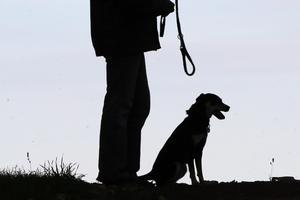 Reglerna är tydliga kring när hundar ska vara kopplade. Foto: Frank Augstein/AP Photo