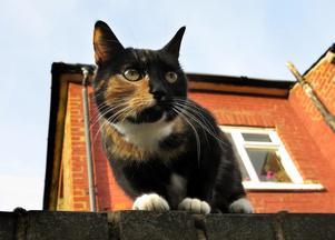 Katter är både mysiga och skadedjur, beroende på vilken miljö de lever i.
